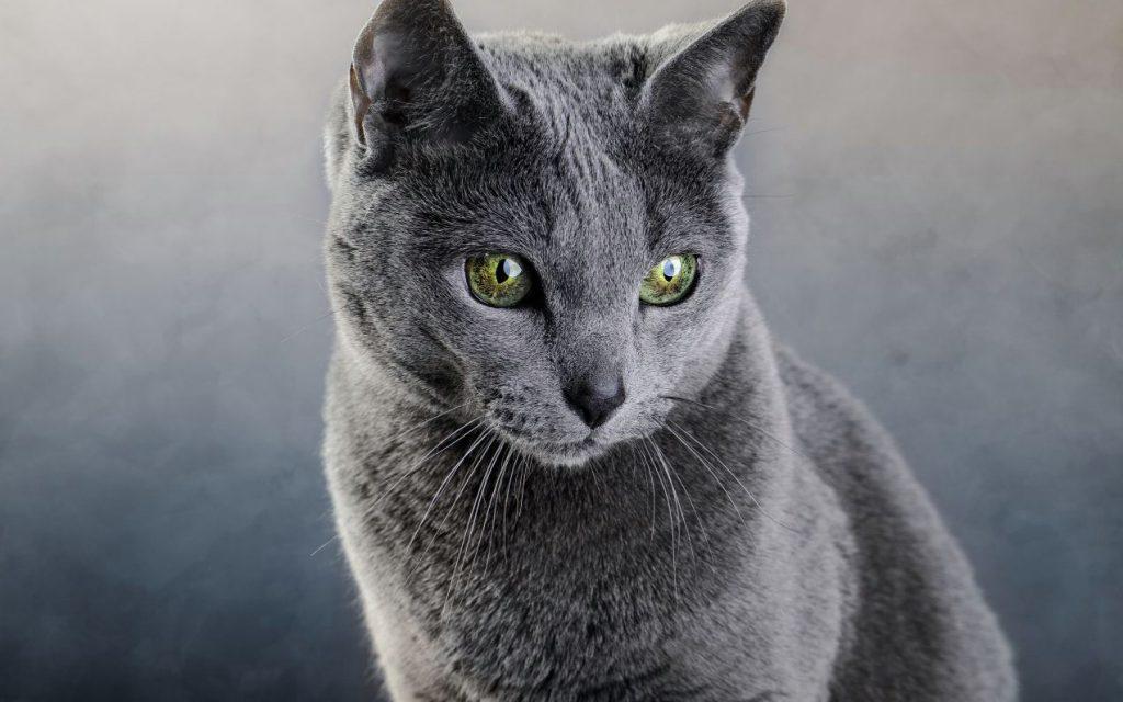 Thành Phố Chó Mèo